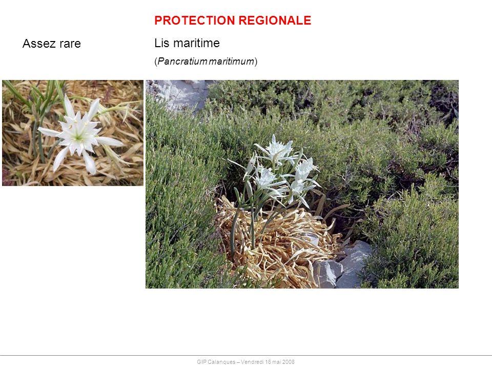 PROTECTION REGIONALE Lis maritime (Pancratium maritimum) Assez rare GIP Calanques – Vendredi 16 mai 2008