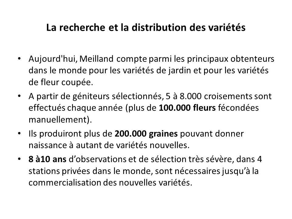 La recherche et la distribution des variétés Aujourd'hui, Meilland compte parmi les principaux obtenteurs dans le monde pour les variétés de jardin et