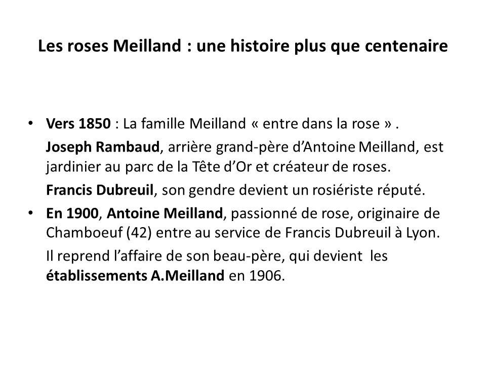 Les roses Meilland : une histoire plus que centenaire Vers 1850 : La famille Meilland « entre dans la rose ». Joseph Rambaud, arrière grand-père dAnto