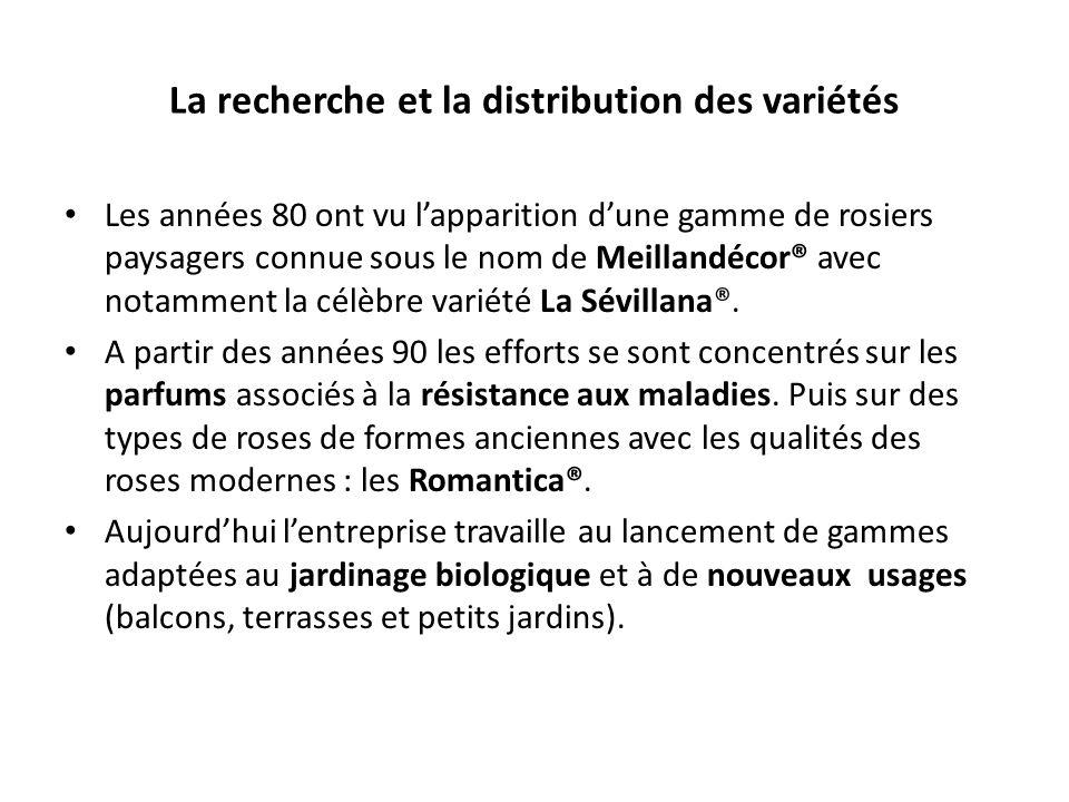 La recherche et la distribution des variétés Les années 80 ont vu lapparition dune gamme de rosiers paysagers connue sous le nom de Meillandécor® avec notamment la célèbre variété La Sévillana®.