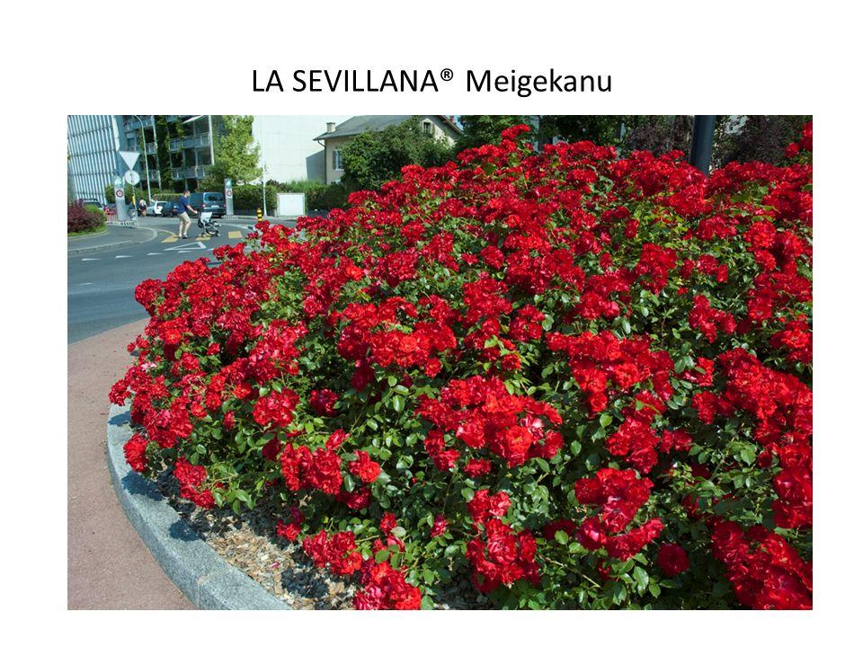 LA SEVILLANA® Meigekanu