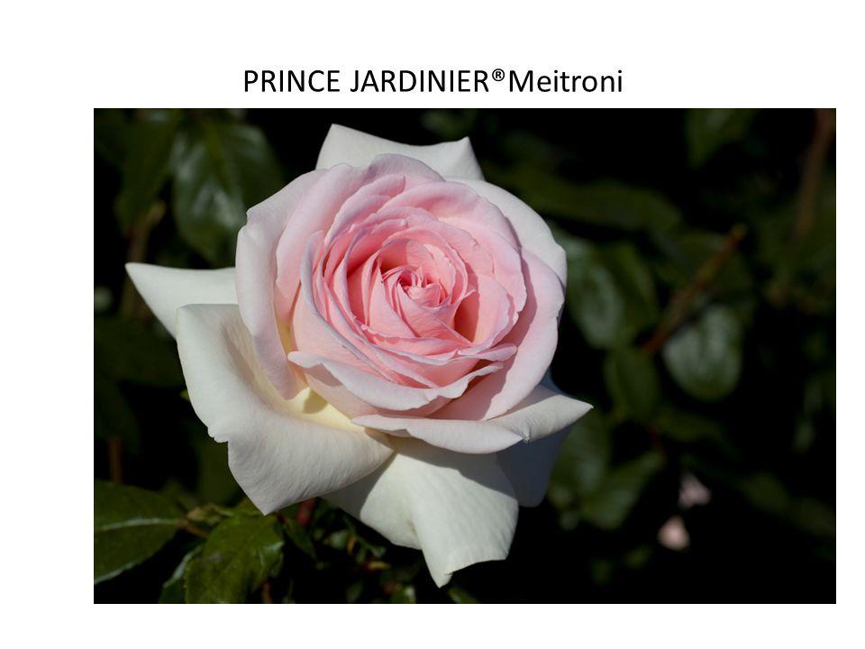 PRINCE JARDINIER®Meitroni