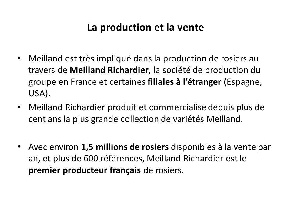 Meilland est très impliqué dans la production de rosiers au travers de Meilland Richardier, la société de production du groupe en France et certaines filiales à létranger (Espagne, USA).