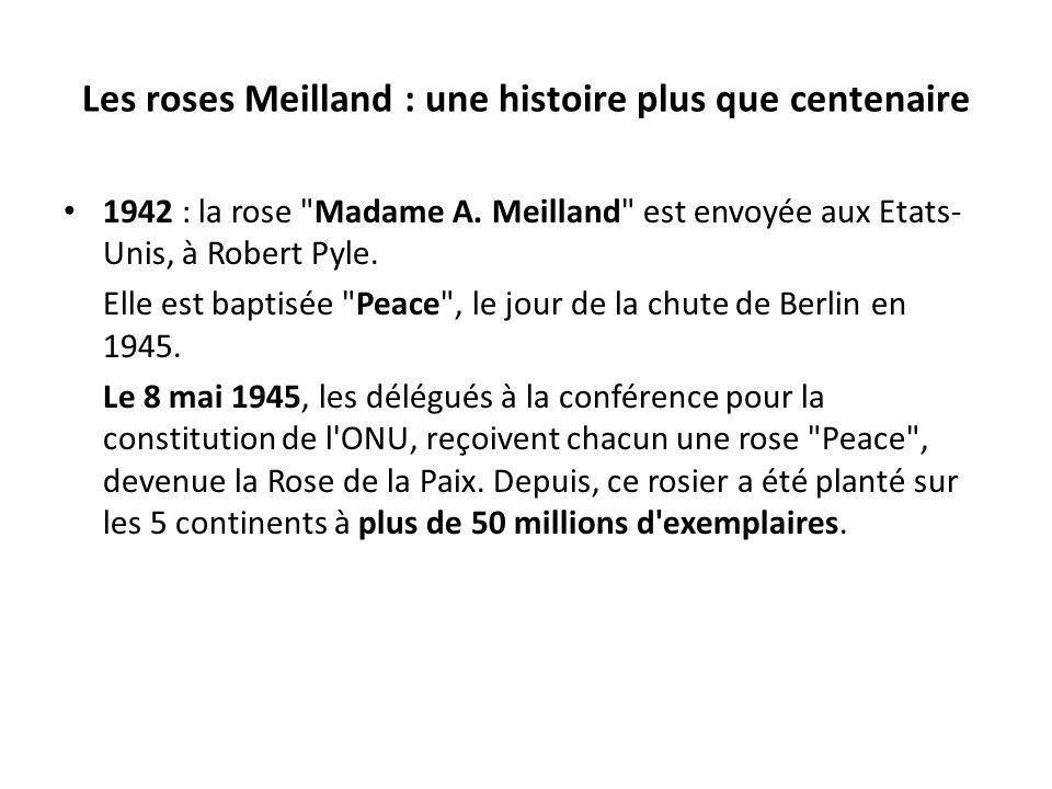 Les roses Meilland : une histoire plus que centenaire 1942 : la rose Madame A.