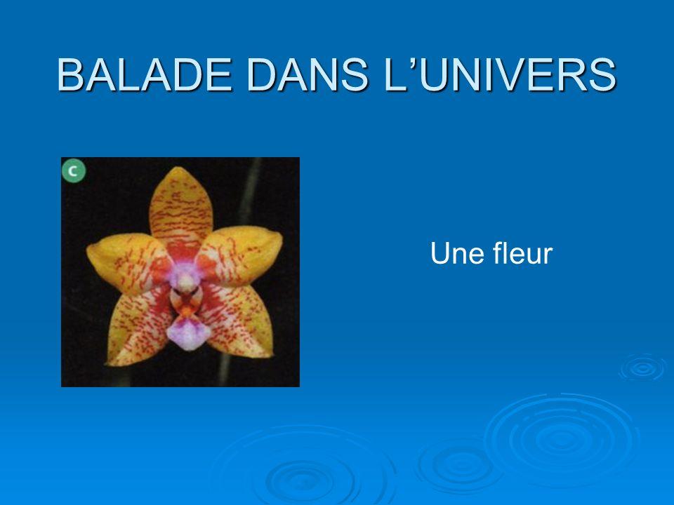 BALADE DANS LUNIVERS Une fleur