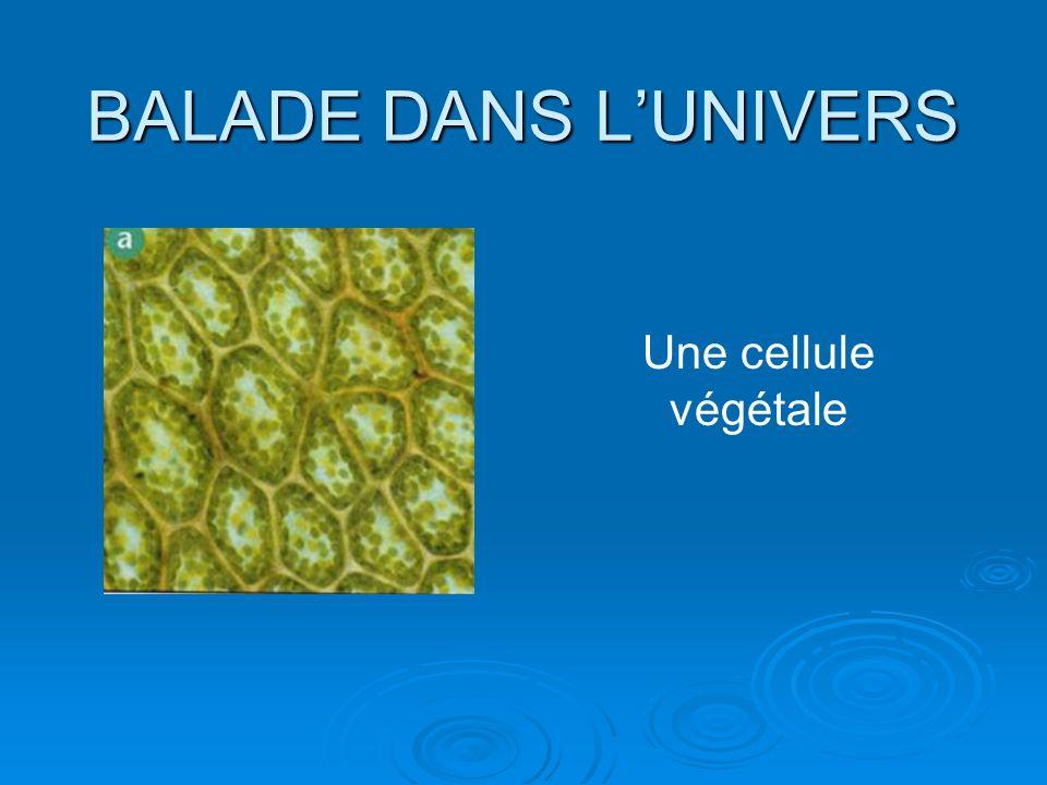 BALADE DANS LUNIVERS Une cellule végétale