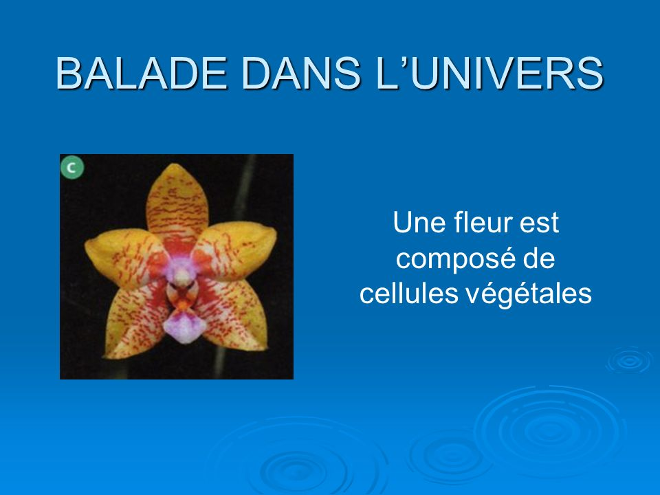 BALADE DANS LUNIVERS Une fleur est composé de cellules végétales