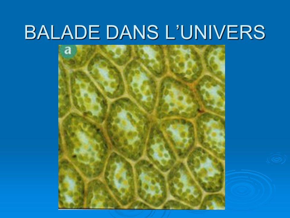 BALADE DANS LUNIVERS Une cellule végétale est composée de molécules.
