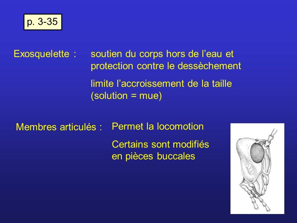 Exosquelette :soutien du corps hors de leau et protection contre le dessèchement limite laccroissement de la taille (solution = mue) Membres articulés