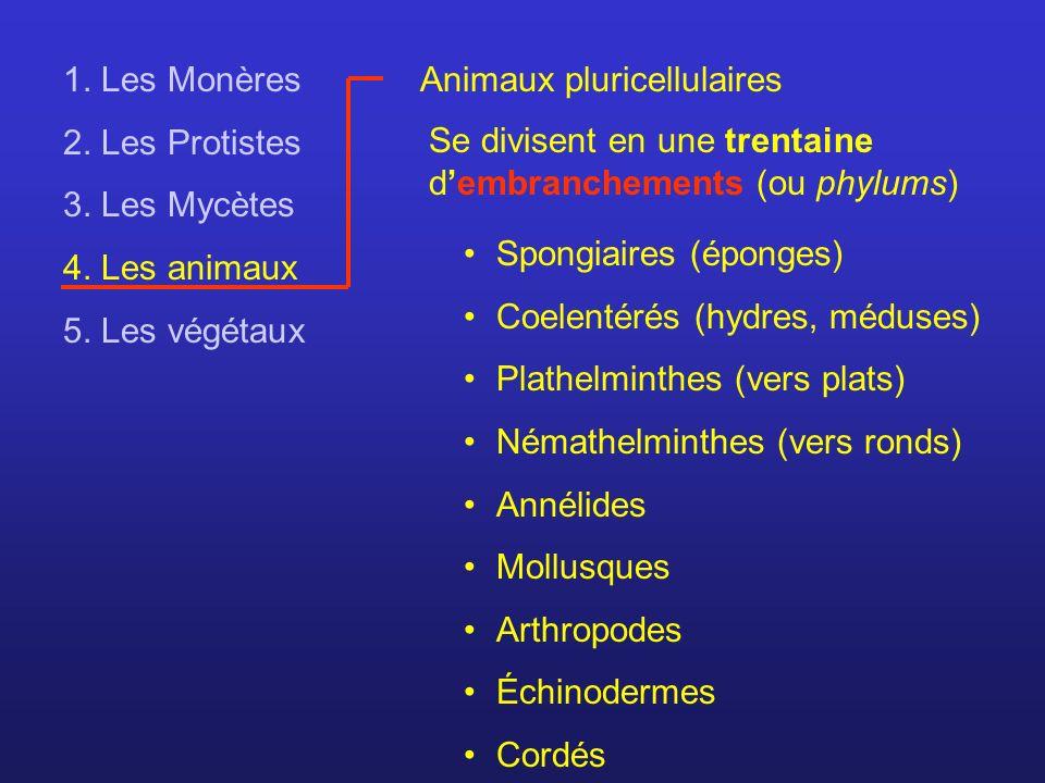 1. Les Monères 2. Les Protistes 3. Les Mycètes 4. Les animaux 5. Les végétaux Animaux pluricellulaires Se divisent en une trentaine dembranchements (o