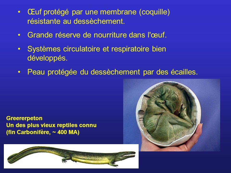 Œuf protégé par une membrane (coquille) résistante au dessèchement. Grande réserve de nourriture dans l'œuf. Systèmes circulatoire et respiratoire bie