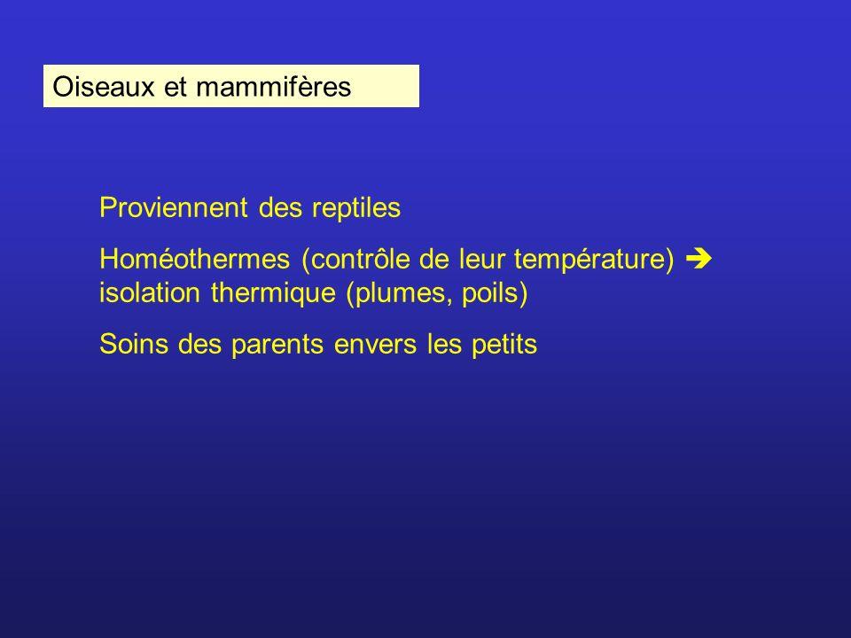 Oiseaux et mammifères Proviennent des reptiles Homéothermes (contrôle de leur température) isolation thermique (plumes, poils) Soins des parents enver