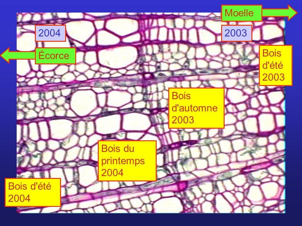 Bois du printemps 2004 Bois d'automne 2003 20032004 Bois d'été 2004 Bois d'été 2003 MoelleÉcorce