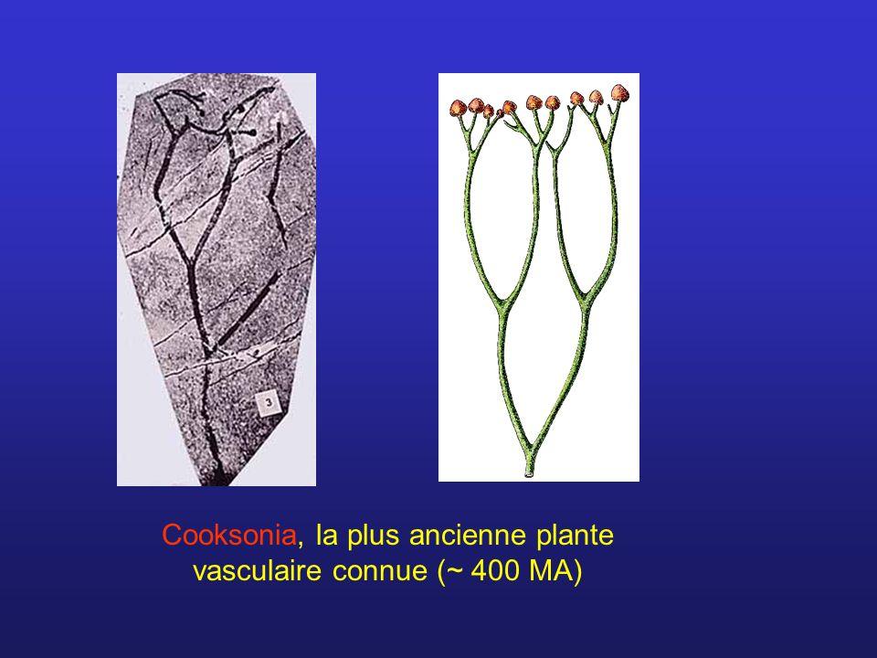 Cooksonia, la plus ancienne plante vasculaire connue (~ 400 MA)