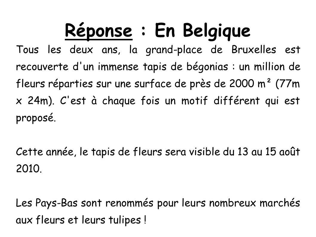 Réponse : En Belgique Tous les deux ans, la grand-place de Bruxelles est recouverte d'un immense tapis de bégonias : un million de fleurs réparties su