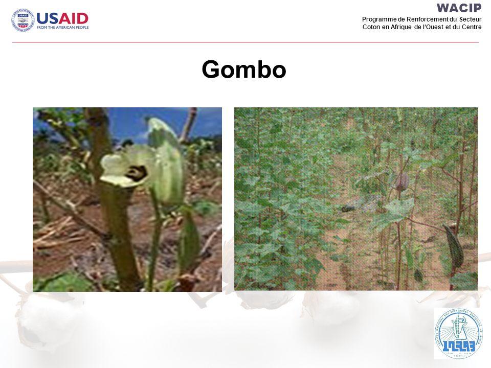 WACIP Programme de Renforcement du Secteur Coton en Afrique de lOuest et du Centre Gombo