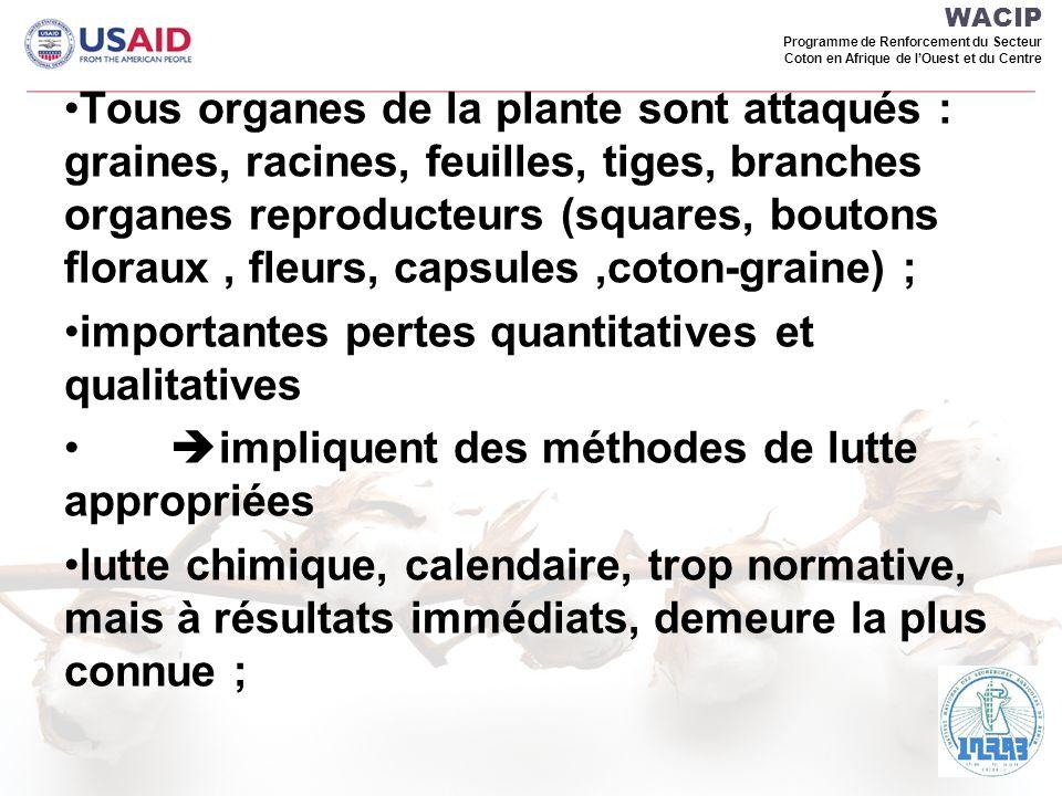 WACIP Programme de Renforcement du Secteur Coton en Afrique de lOuest et du Centre Floraison plantes pièges et cotonnier (Bénin)