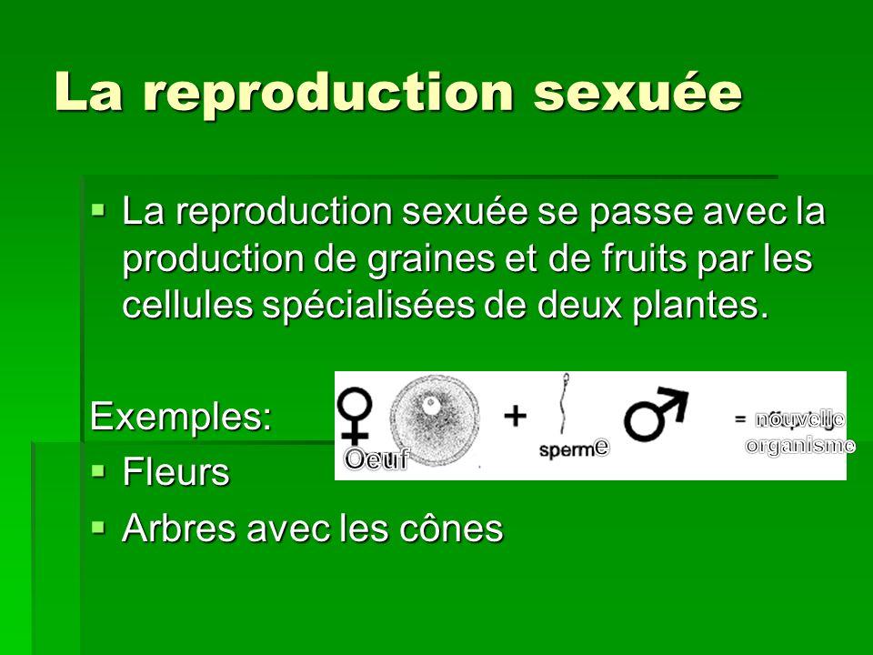 La reproduction sexuée La reproduction sexuée se passe avec la production de graines et de fruits par les cellules spécialisées de deux plantes. La re