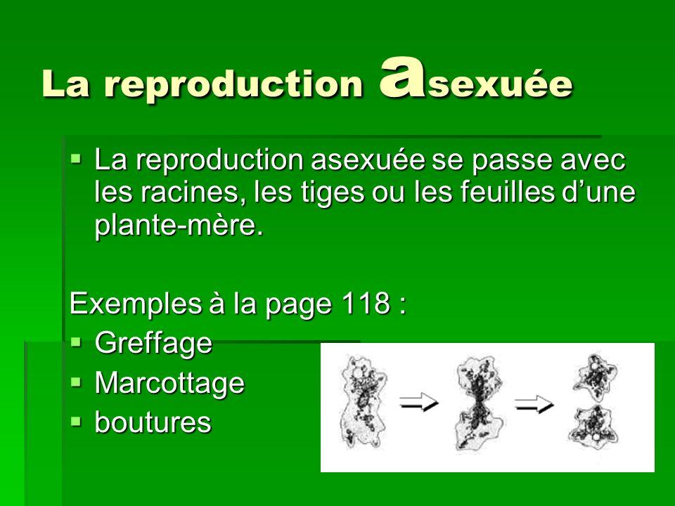 La reproduction a sexuée La reproduction asexuée se passe avec les racines, les tiges ou les feuilles dune plante-mère. La reproduction asexuée se pas