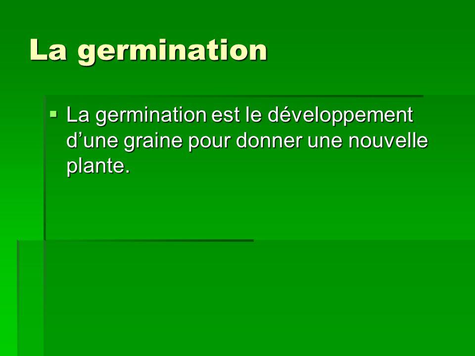 La germination La germination est le développement dune graine pour donner une nouvelle plante. La germination est le développement dune graine pour d