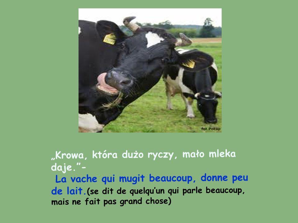 Krowa, która dużo ryczy, mało mleka daje.- La vache qui mugit beaucoup, donne peu de lait. (se dit de quelquun qui parle beaucoup, mais ne fait pas gr