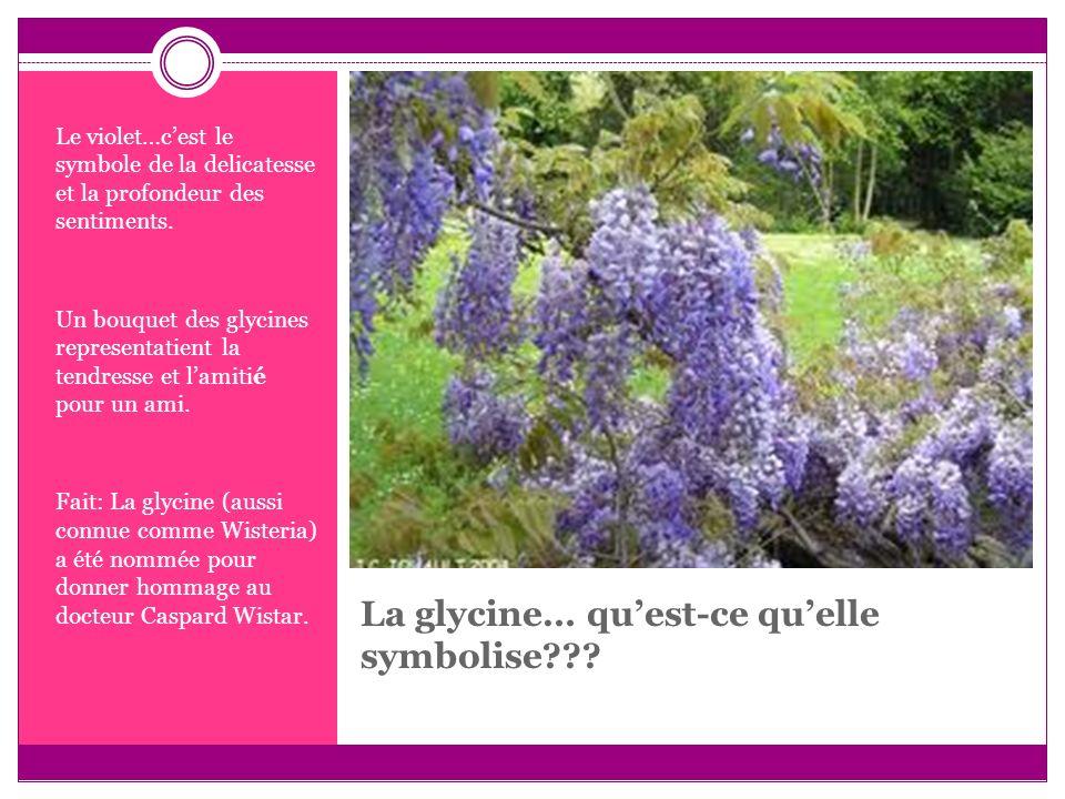 La glycine… quest-ce quelle symbolise??? Le violet…cest le symbole de la delicatesse et la profondeur des sentiments. Un bouquet des glycines represen