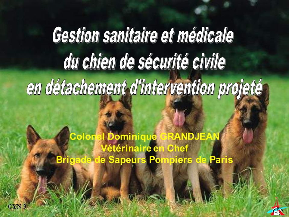 Colonel Dominique GRANDJEAN Vétérinaire en Chef Brigade de Sapeurs Pompiers de Paris CYN 3