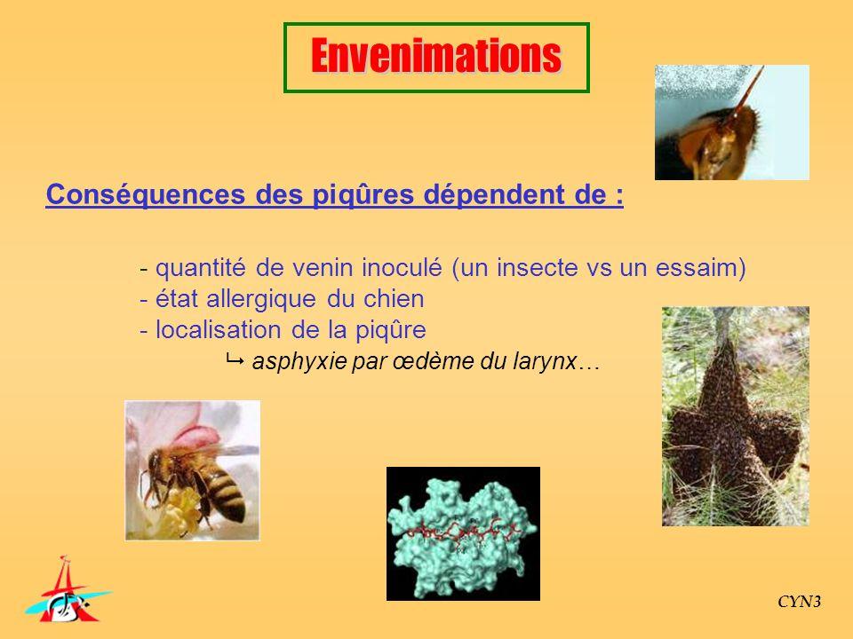 CYN3 Conséquences des piqûres dépendent de : - quantité de venin inoculé (un insecte vs un essaim) - état allergique du chien - localisation de la piq