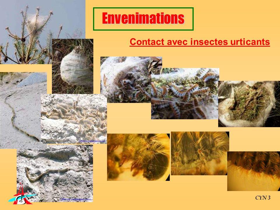 CYN 3 Contact avec insectes urticants