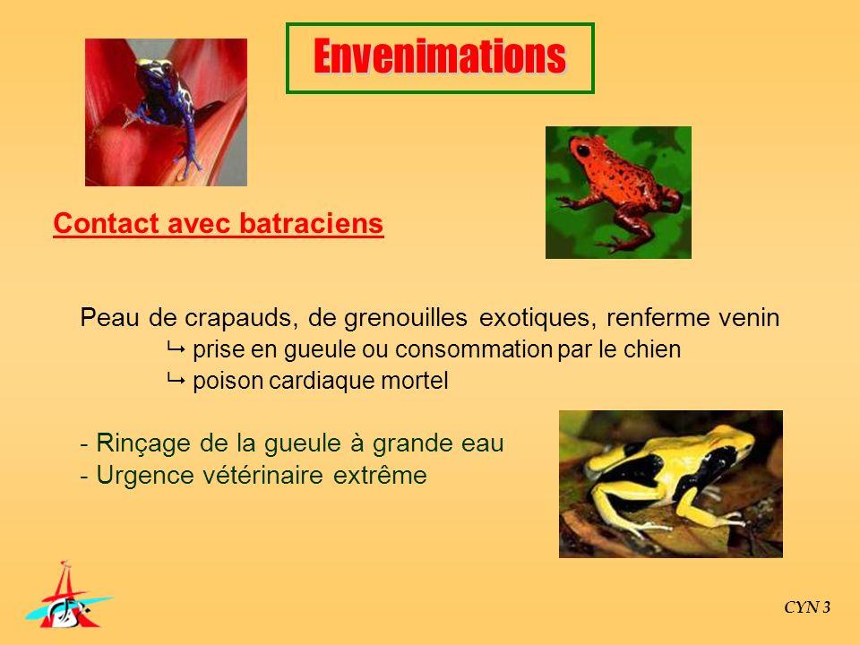CYN 3 Contact avec batraciens Peau de crapauds, de grenouilles exotiques, renferme venin prise en gueule ou consommation par le chien poison cardiaque