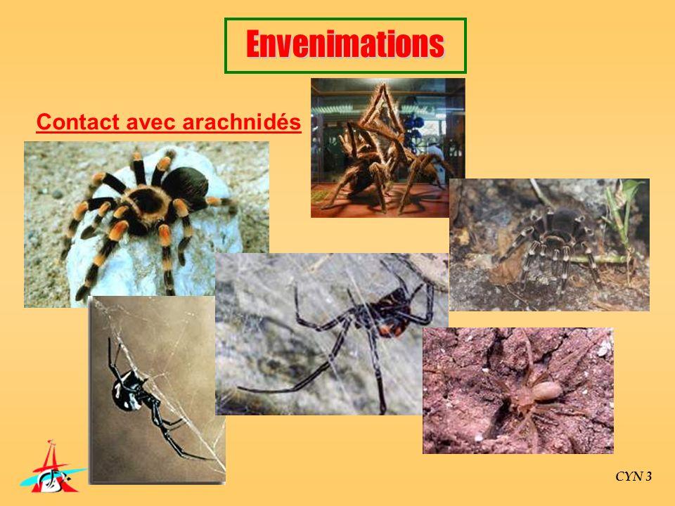 CYN 3 Contact avec arachnidés