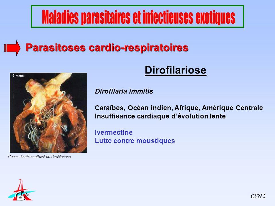 Dirofilariose Dirofilaria immitis Caraïbes, Océan indien, Afrique, Amérique Centrale Insuffisance cardiaque dévolution lente Ivermectine Lutte contre