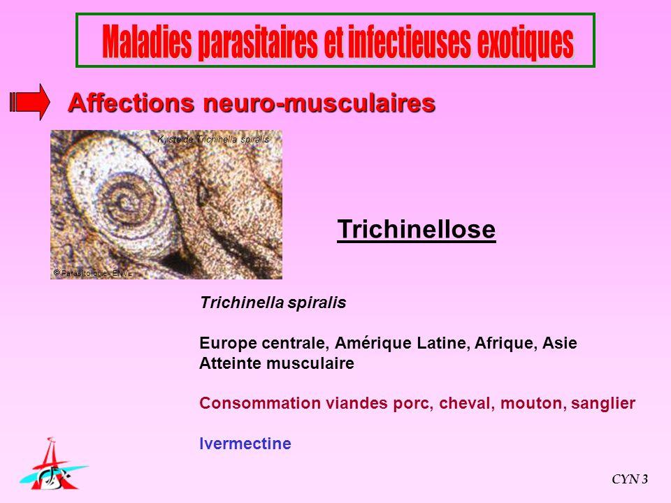 Trichinellose Trichinella spiralis Europe centrale, Amérique Latine, Afrique, Asie Atteinte musculaire Consommation viandes porc, cheval, mouton, sang