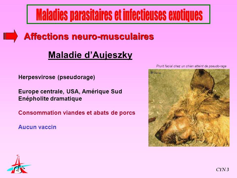 Maladie dAujeszky Herpesvirose (pseudorage) Europe centrale, USA, Amérique Sud Enépholite dramatique Consommation viandes et abats de porcs Aucun vacc