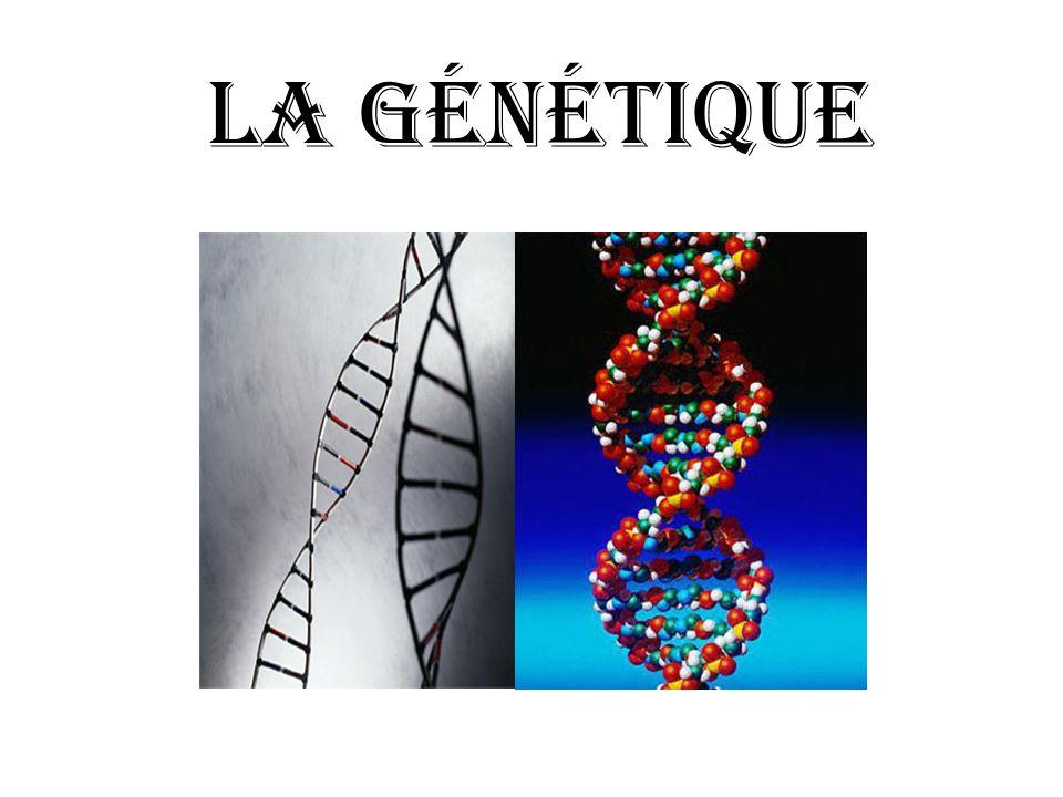 Quest-ce que la génétique.