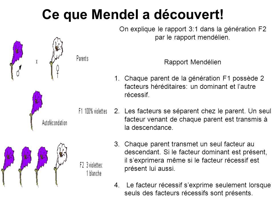 Ce que Mendel a découvert! On explique le rapport 3:1 dans la génération F2 par le rapport mendélien. Rapport Mendélien 1.Chaque parent de la générati