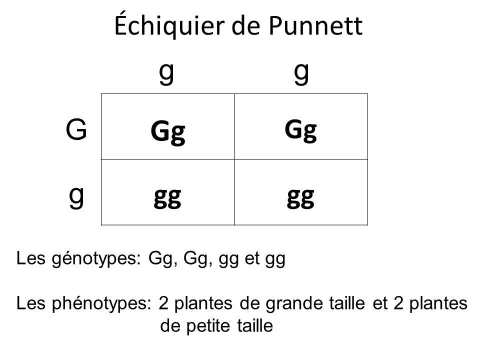 Échiquier de Punnett Gg gg G g gg Les génotypes: Gg, Gg, gg et gg Les phénotypes: 2 plantes de grande taille et 2 plantes de petite taille