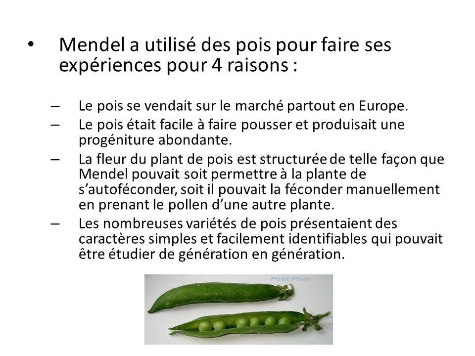Mendel a utilisé des pois pour faire ses expériences pour 4 raisons : – Le pois se vendait sur le marché partout en Europe. – Le pois était facile à f