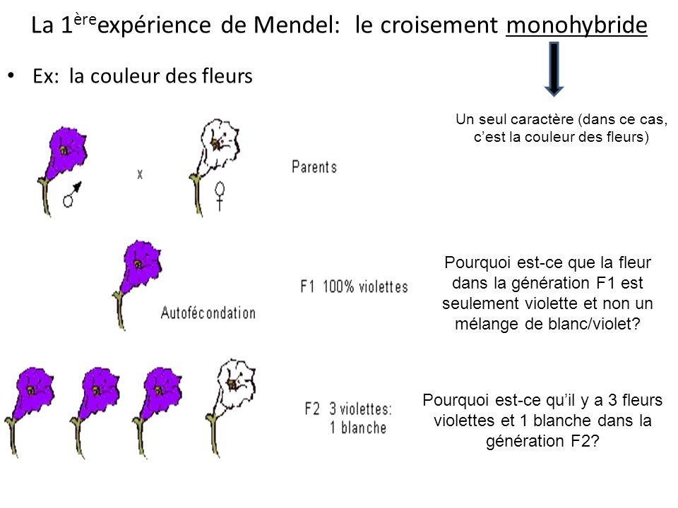 La 1 ère expérience de Mendel: le croisement monohybride Ex: la couleur des fleurs Pourquoi est-ce que la fleur dans la génération F1 est seulement vi