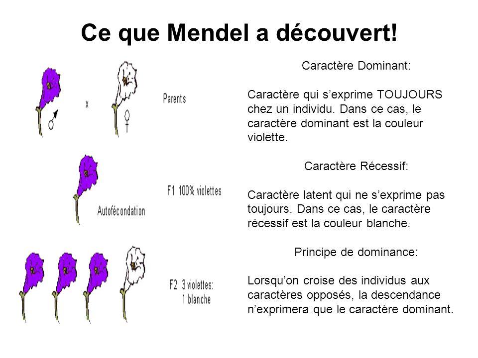 Ce que Mendel a découvert! Caractère Dominant: Caractère qui sexprime TOUJOURS chez un individu. Dans ce cas, le caractère dominant est la couleur vio