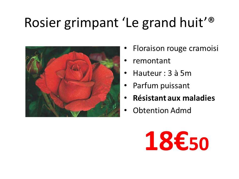 Rosier grimpant Le grand huit® Floraison rouge cramoisi remontant Hauteur : 3 à 5m Parfum puissant Résistant aux maladies Obtention Admd 18 50