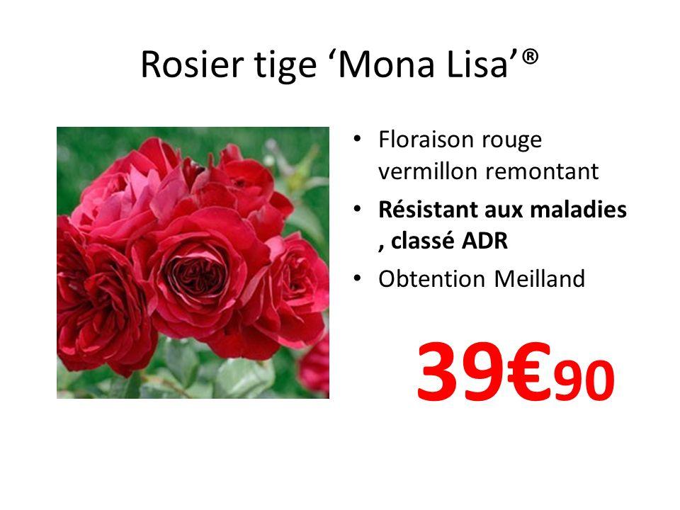 Rosier tige Mona Lisa® Floraison rouge vermillon remontant Résistant aux maladies, classé ADR Obtention Meilland 39 90