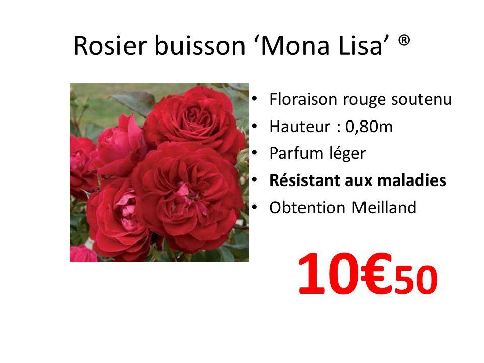Rosier grosses fleurs Melissa ® Floraison jaune citron remontant Hauteur : 1m Parfumé Résistant aux maladies 12 90