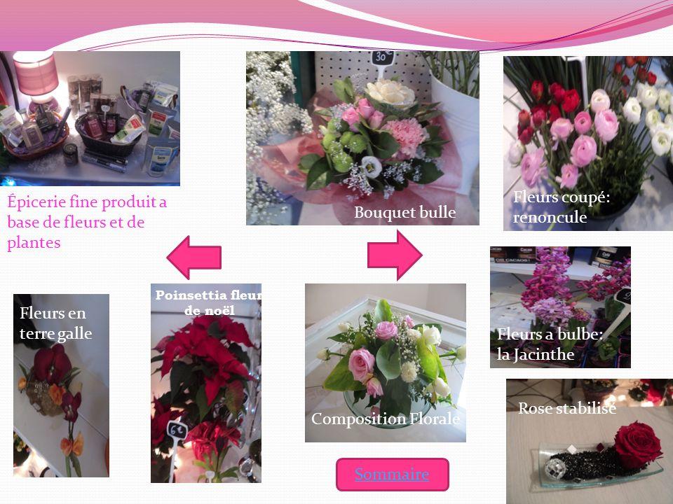Bouquet bulle Fleurs coupé: renoncule Épicerie fine produit a base de fleurs et de plantes Rose stabilisé Composition Florale Poinsettia fleur de noël
