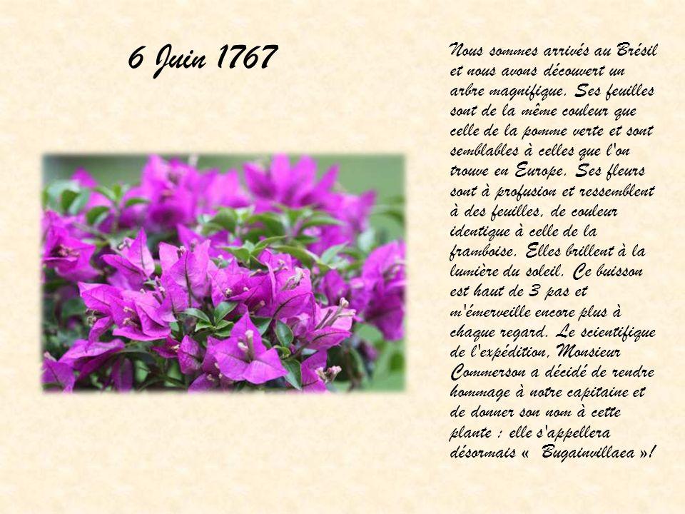 6 Juin 1767 Nous sommes arrivés au Brésil et nous avons découvert un arbre magnifique. Ses feuilles sont de la même couleur que celle de la pomme vert