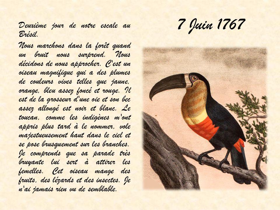 7 Juin 1767 Deuxième jour de notre escale au Brésil. Nous marchons dans la forêt quand un bruit nous surprend. Nous décidons de nous approcher. C'est