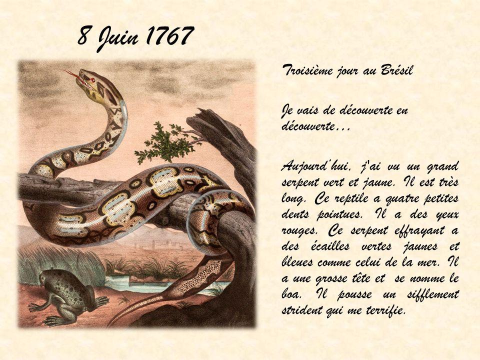 8 Juin 1767 Troisième jour au Brésil Je vais de découverte en découverte… Aujourdhui, j'ai vu un grand serpent vert et jaune. Il est très long. Ce rep