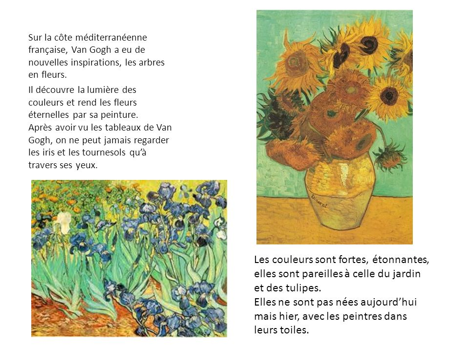 Sur la côte méditerranéenne française, Van Gogh a eu de nouvelles inspirations, les arbres en fleurs. Il découvre la lumière des couleurs et rend les