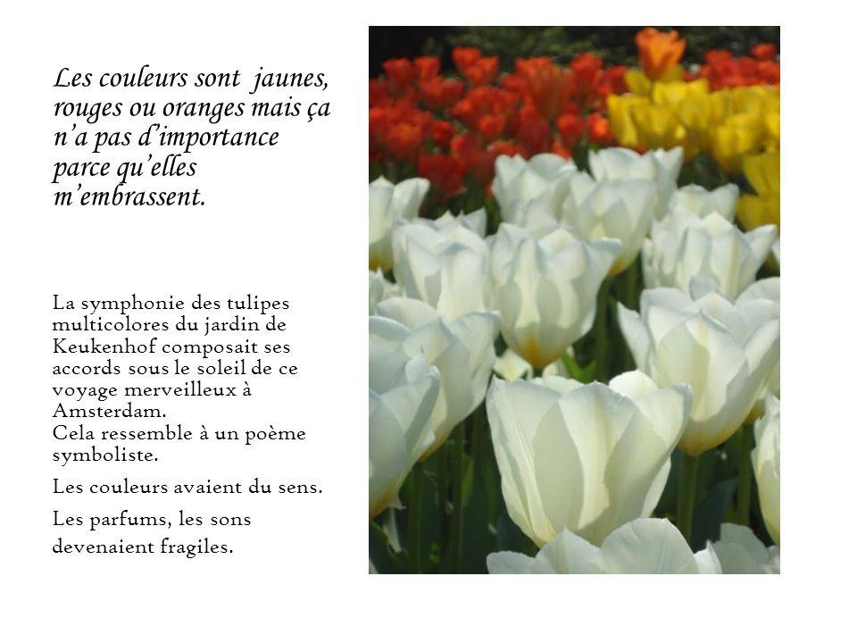 Les couleurs sont jaunes, rouges ou oranges mais ça na pas dimportance parce quelles membrassent. La symphonie des tulipes multicolores du jardin de K