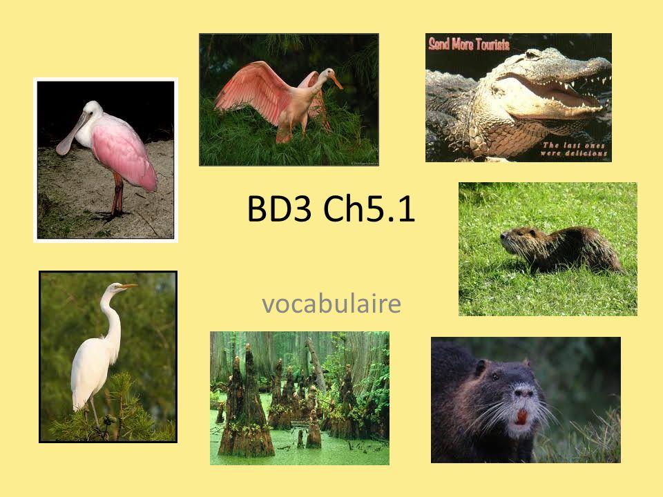BD3 Ch5.1 vocabulaire